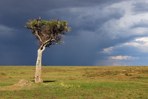 Stormy Atmosphere in the Masai Mara, Kenya