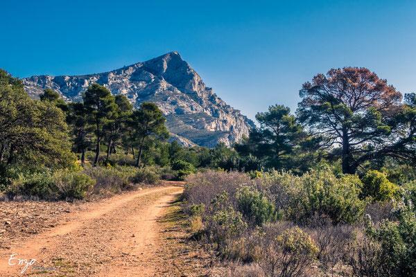Aix en provence - Sainte Victoire - chemin forestier & pin - 026