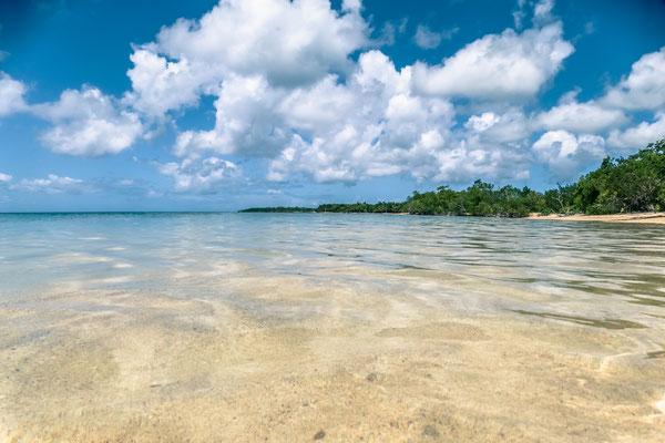 Lagon en bord de Mangrove en guadeloupe