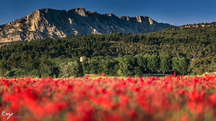 Photographie d'un champs de coquelicot à Aix en provence - Champs de coquelicot - Enzo Fotographia - Enzo Photographie