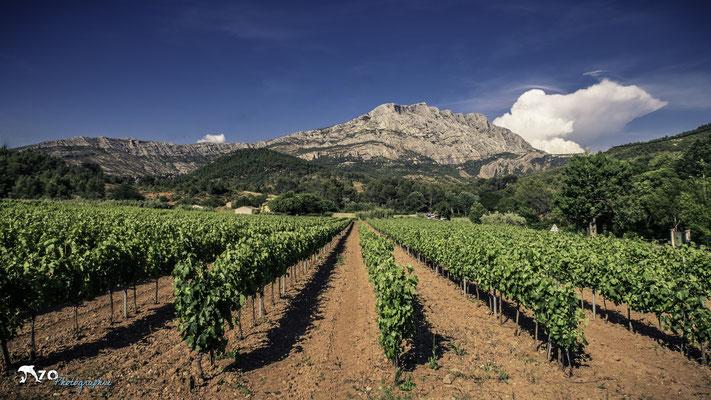 Aix en provence - Sainte Victoire - Vignes - 029