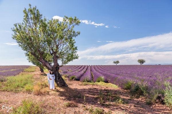 couple avec une femme enceinte sous un arbre dans un champs de lavande