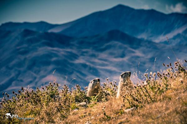 Val d'Allos - Randonnée près des marmottes