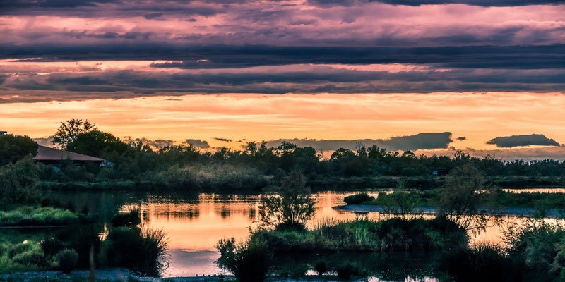 Camague - parc ornithologique camargue pont de gau - Coucher du soleil - 034