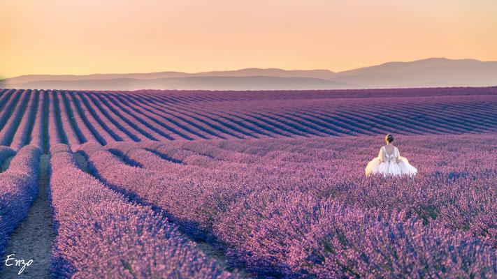 jeune mariée seule dans un champs de lavande à valensole au coucher du soleil