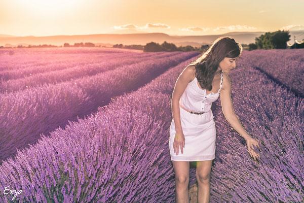 champs de lavande - Valensole - Provence - lavender fields provence
