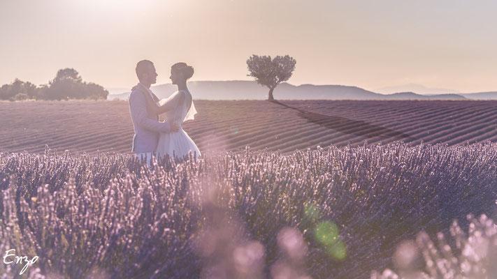 Jeune marié dans un champs de lavande à valensole avec un arbre en contre jour