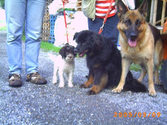 Cleo, Hedi, Hawa
