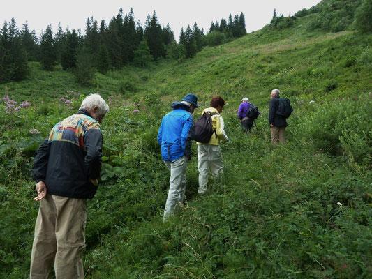 Auf der Suche nach dem Allermannsharnisch (Allium victorialis)