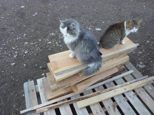 Plume et Pantoufle les chats pédagogiques
