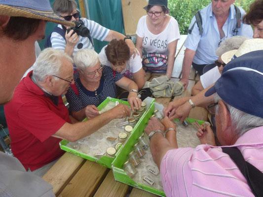 """Atelier """"Découverte des graines"""" avec un groupe de seniors"""