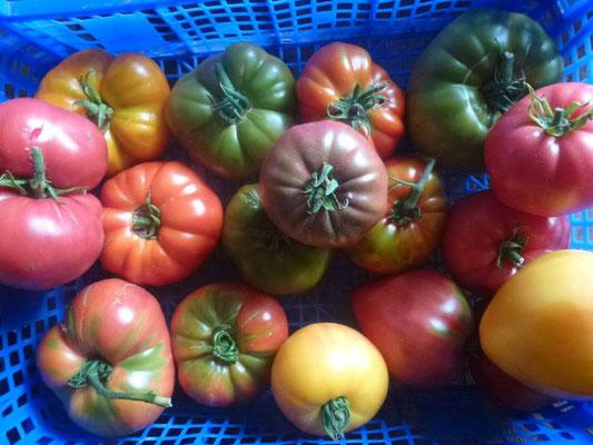 De belles tomates