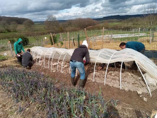 Installation d'un tunnel nantais et plantation des pommes de terres par les stagiaires