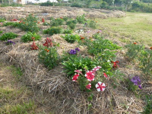 Les fleurs plantées avec l'école d'Epinac en mai