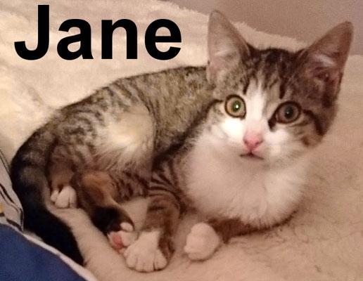 7.2.21 Jane