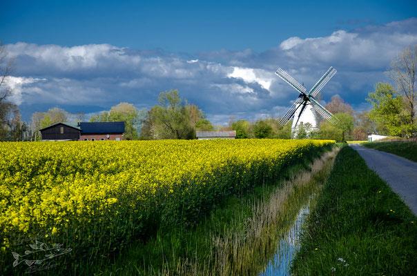"Windmühle ""Betty""in Lüdingworth,Landkreis Cuxhaven"