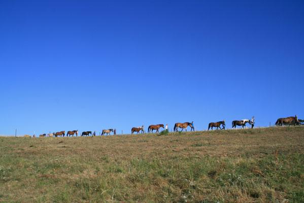Gemeinsames Pferdeholen