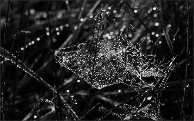 spider web in morning dew