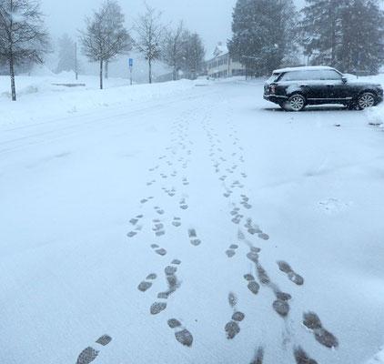 Spuren im Schnee! (von 4 KTVern)