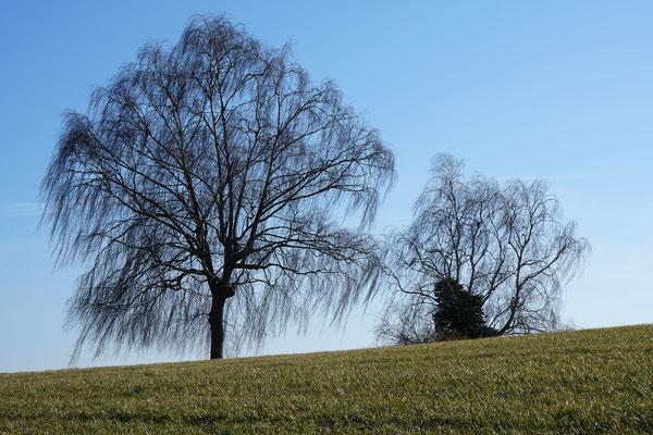 Scherenschnitt-Bäume