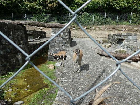Tierpark Dählhölzli
