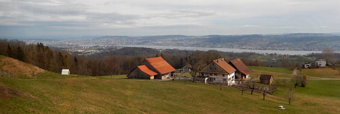 Sicht aus dem Bus auf Zürich mit See