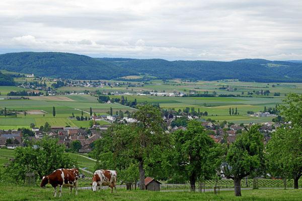 Klettgaupanorama mit Hallau und Wilchingen