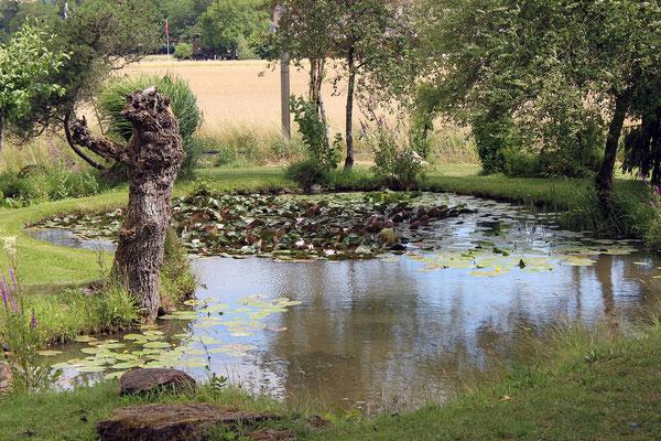 Seerosenweiher