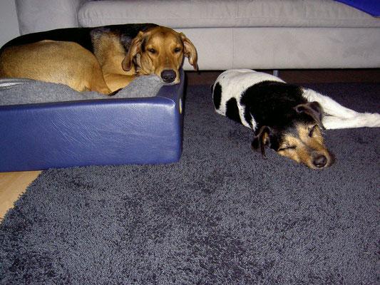 Auch Mehrhundehalter sind im Hundetraining herzlich willkommen