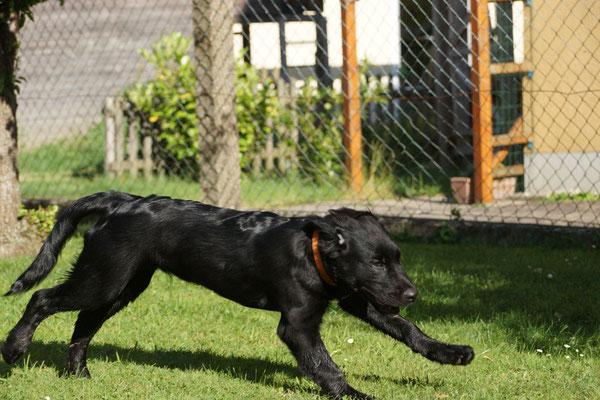 Hundeschule Pfotenglück: Hundetraining für jedes Alter, Foto: Hans Sennebogen