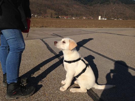 Hundetraining in gewohnter Umgebung: Drinnen & draussen