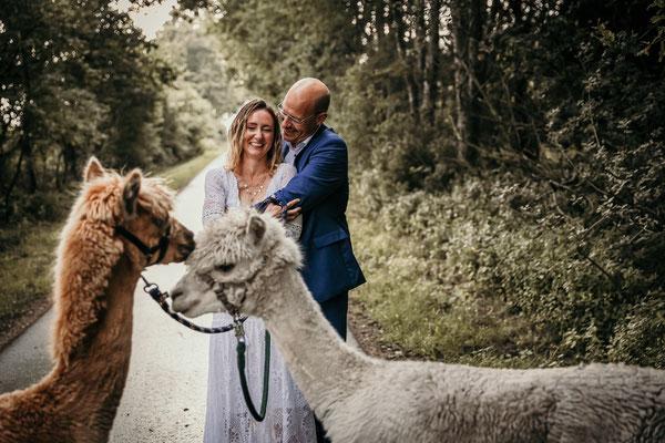Hochzeit Norddeutschland Alpakas Hochzeitsfotograf