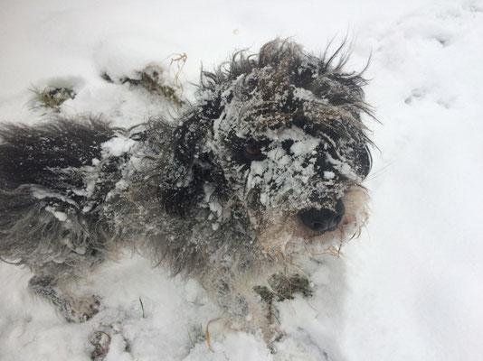 Schneemonster <3 2017