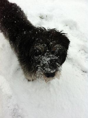 Schneespass - 2011