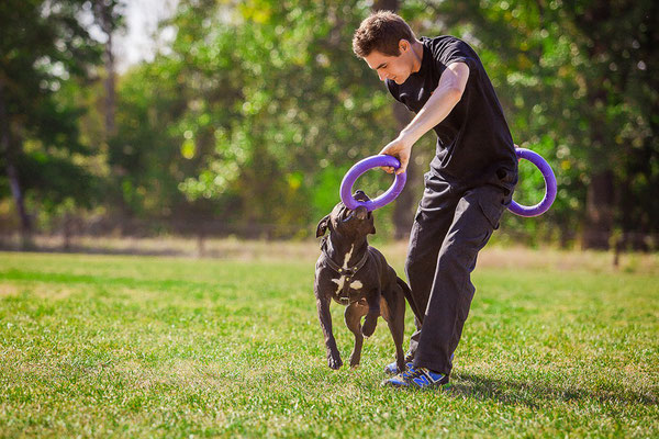 Dog Toys Suitable For Any Size Dogs