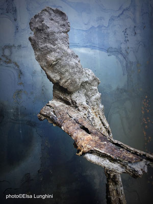 Inspirations naturelles (Dordogne juillet-août 2018). Terre & bois.