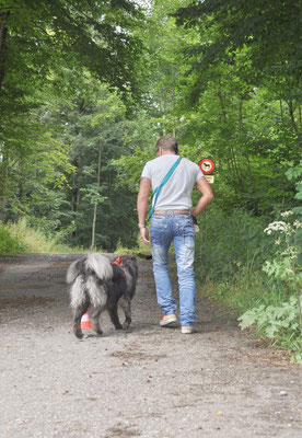 Freies Folgen im Wald