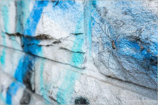 Paarung auf dem Graffiti
