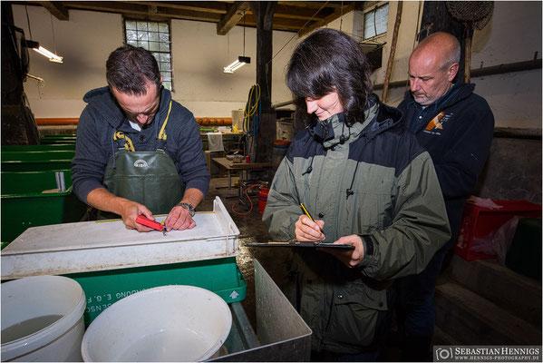 Untersuchung und Markierung der Jungtiere