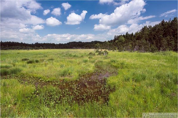 Lebensraum der Sumpf-Weichwurz im Allgäu