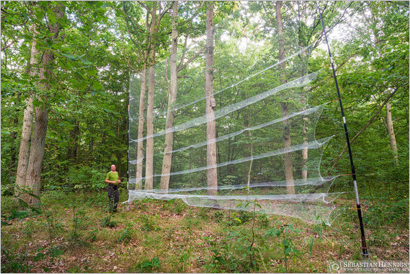 Fangnetz im Eichenwald
