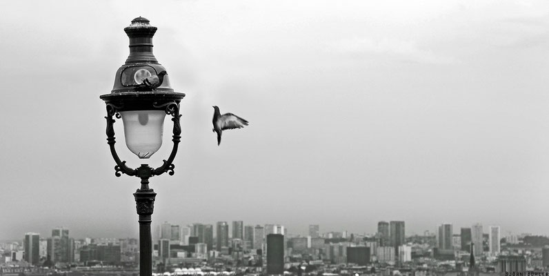 Tauben über Paris