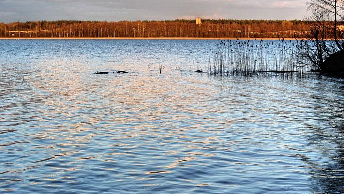Lake Stropu in Daugavpils, Latvia