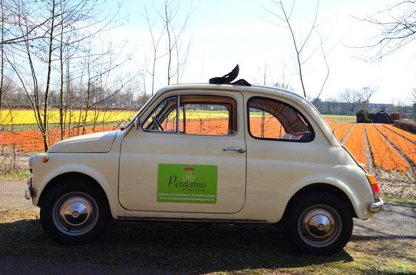 Visit Keukenhof in our Fiat 500