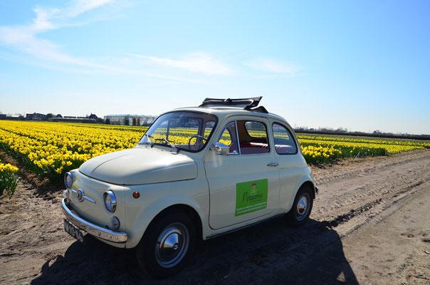 Tour durch die Flower Region in unserem klassischen Fiat 500