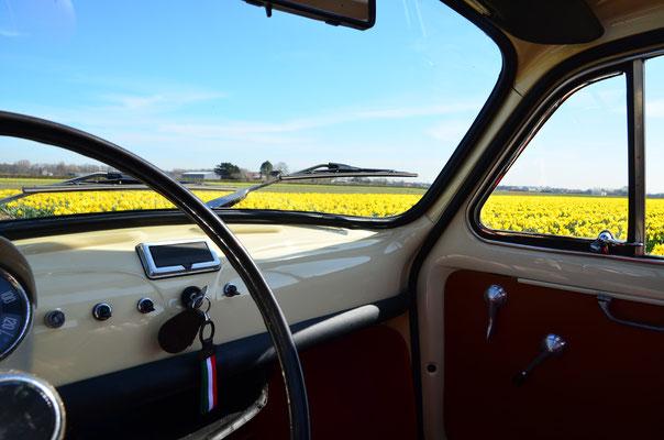 Toeren door de Bollenstreek in in Fiat 500 Oldtimer