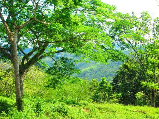 jardin deden jamaica - Jardin D Eden
