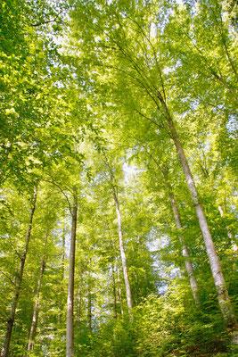 29 Waldrausch