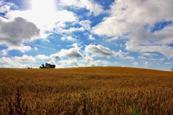 47 Getreidefeld mit Himmel