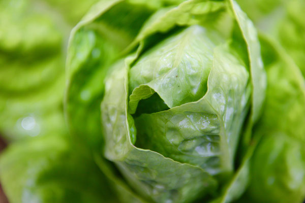 45 Salatkopf